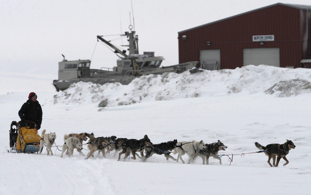 . Musher Mitch Seavey arrives at the Unalakleet, Alaska, checkpoint Sunday, March 10, 2013, during the Iditarod Trail Sled Dog Race. (AP Photo/The Anchorage Daily News, Bill Roth)
