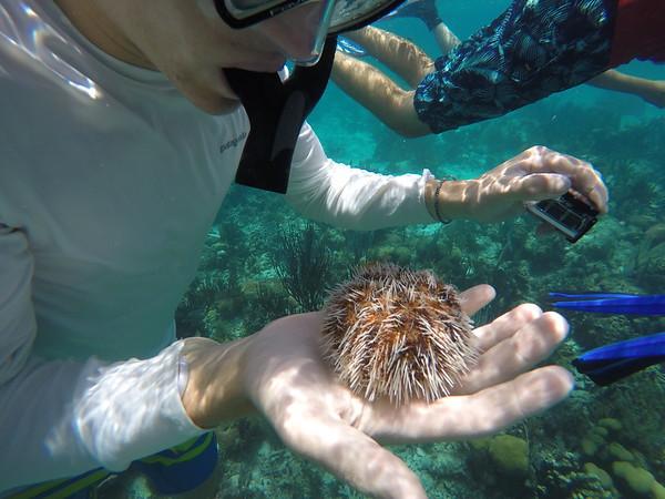Belize Coral Reef Week 2017