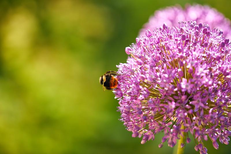Flowers-5492.jpg