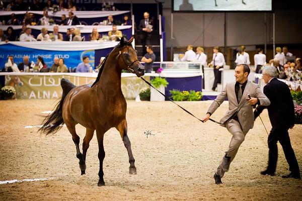 2012  Aachen Show