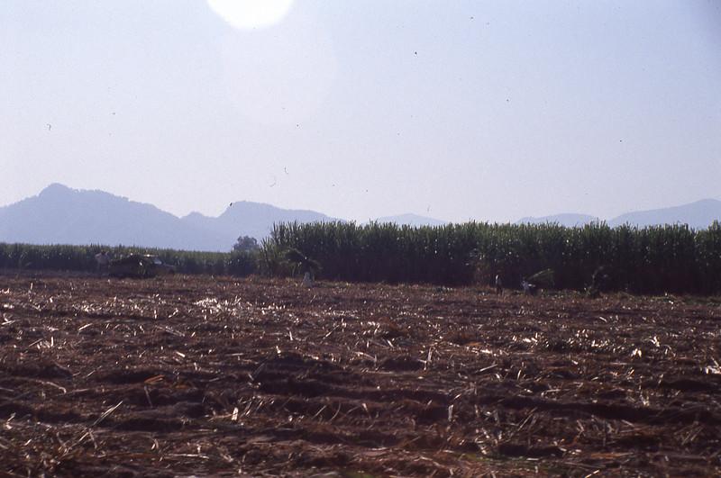 004 Tala Sugar Cane Harvest.jpg