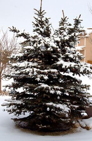 Colorado Christmas '09