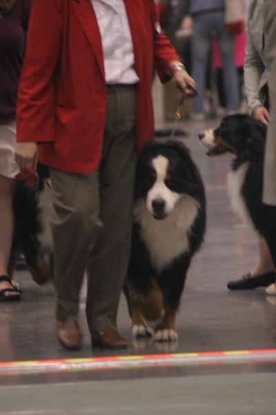 Thursday 5/10/07 Veteran Dogs