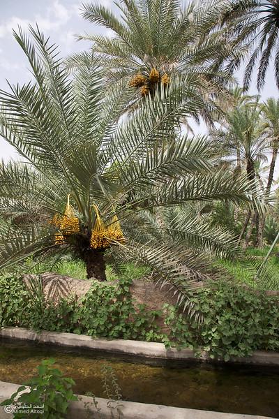 Aldhahir - Bidyah 4.jpg