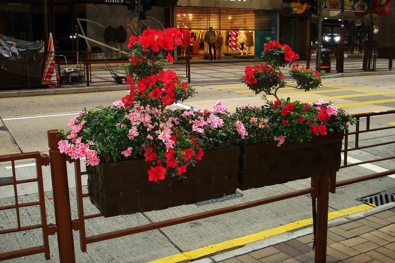 Street Flower Boxes.jpg
