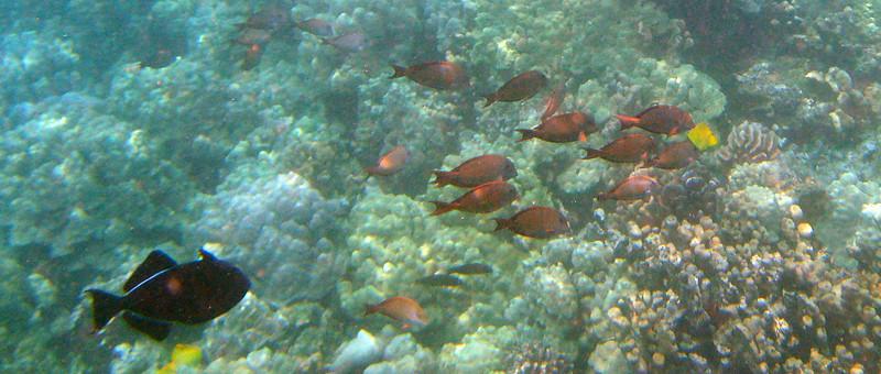 424- 20080416- Hawaii 20-Snorkelling IMG_0583.jpg