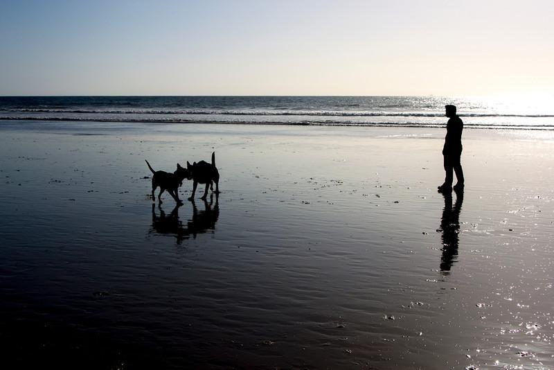 dogs_beach-3.jpg