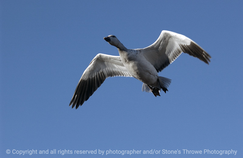 birds-bosque_del_apache_nm-01dec06-3092