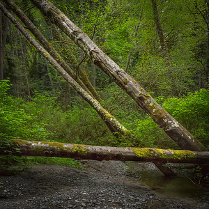 Shingle Mill Creek Vashon