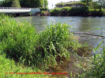 2013 0514 Cedar River walk