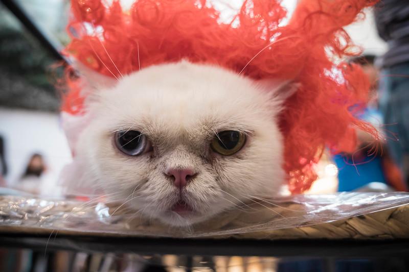 VividSnaps-The-Seletar-Mall-CAT-Dress-Up-Contest-298.jpg