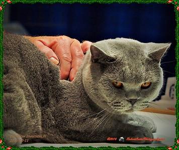 2016-12-11....Nature Coast Cat Club Show