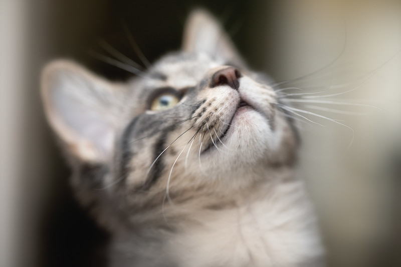 Kitten-35-Edit.jpg