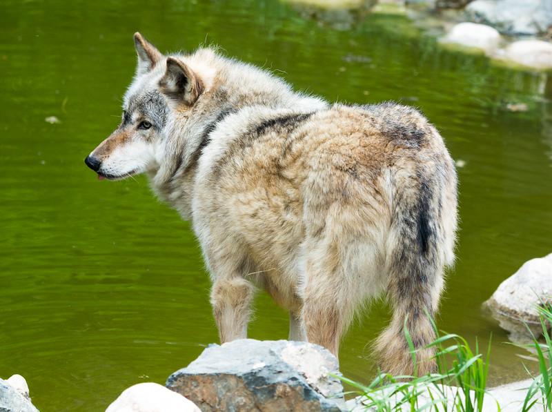 2016 Wolf Institute - Ely, MN-16.jpg