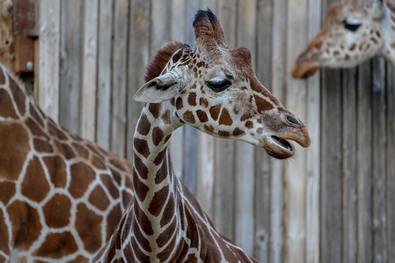Oakland Zoo-71250-17.jpg
