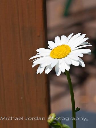 Summer Flowers in Northeast Ohio