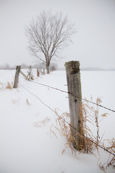 Fence and tree field Creek Road Sax-Zim Bog MN IMG_8067.jpg