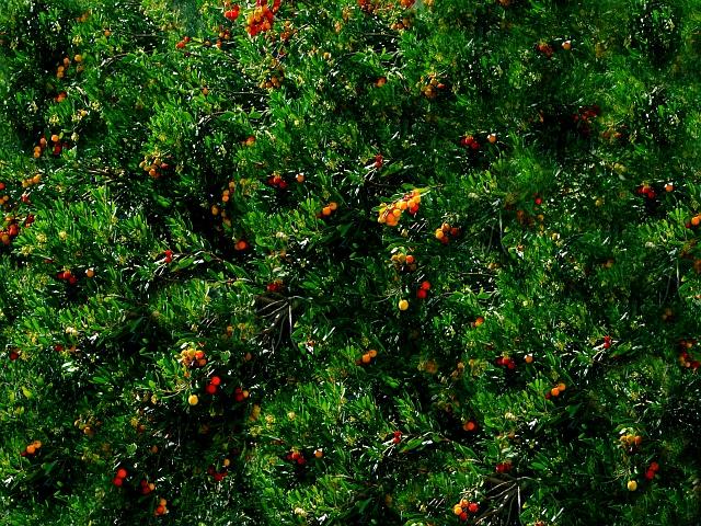 #37 'Berry Bush' by Pontiac005.  10/31/07.  Olympus E-510. Exif: http://fourthirdsphoto.com/vbb/showthread.php?t=17816&goto=newpost