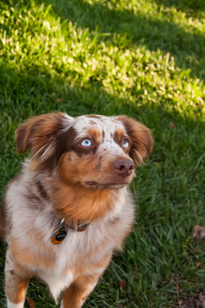 DogDays_Dogs_Gardens_2015_PIC_6470.jpg