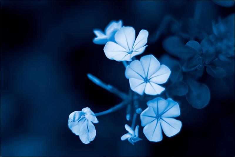 20111015_Flower9.jpg