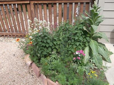 June 2012 - Garden