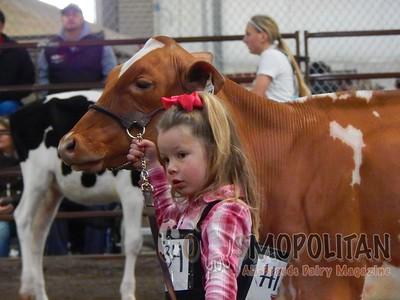 Midwest Spring Natl HolsteinHfr-2016