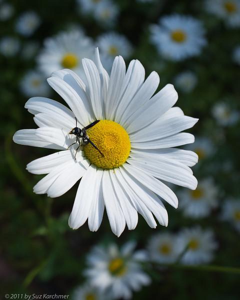 Bug and Daisy.jpg