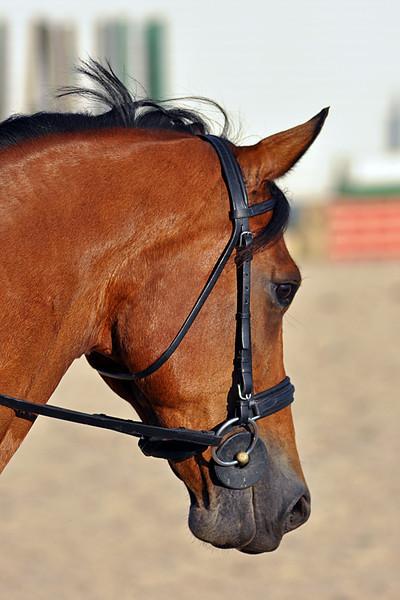 Horses July 2011 317a.jpg