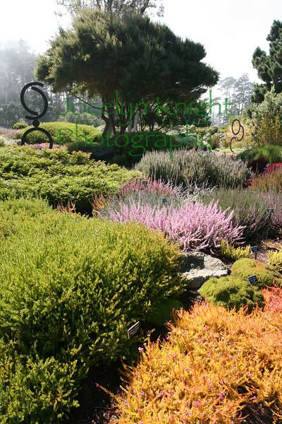Mendocino Botanical Gardens September