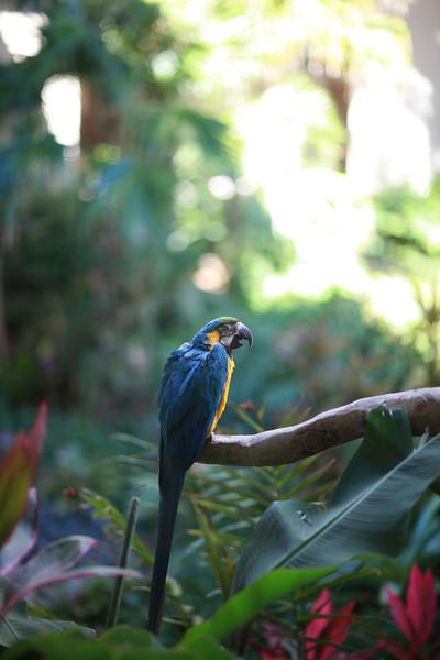 Kauai_D5_AM 244.jpg