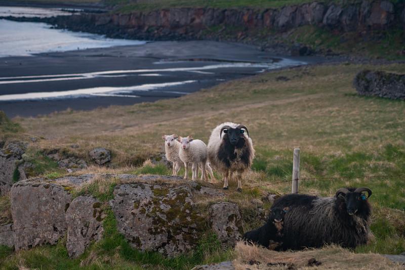 Iceland-434.jpg