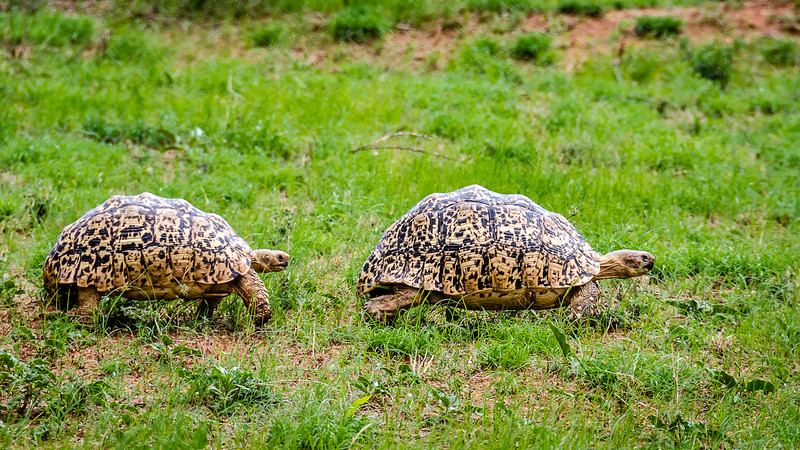 Kenya-0227.jpg