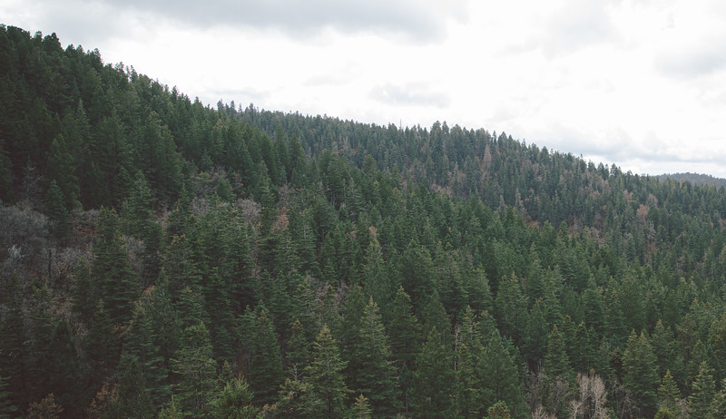Cloudcroft - New Mexico-4701.jpg