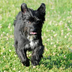 2010-07-02 Denville Dog Park