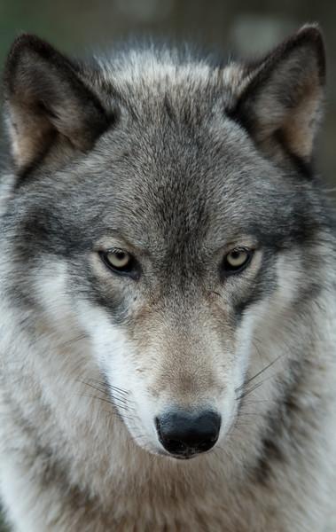 Seacrest Wolves_-8.jpg