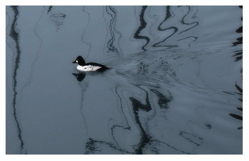 Bird62a.jpg