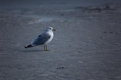 2010 February - Cocoa Beach and Cape Canaveral FL