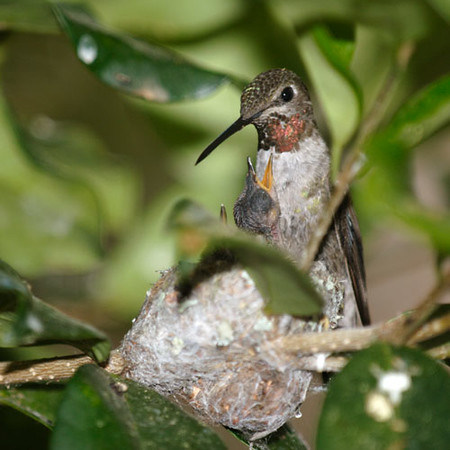 Hummingbird Nest 4.jpg
