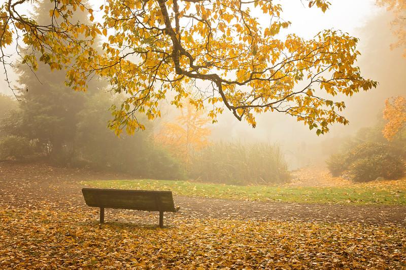 bench in fog.jpg