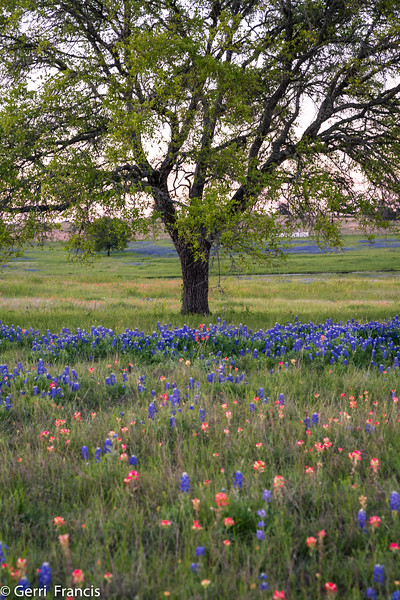 Texas Hill Country in Spring