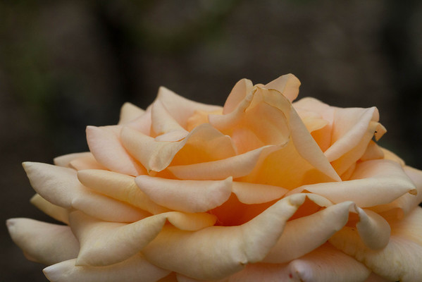 Kelleher Rose Garden - July 2013
