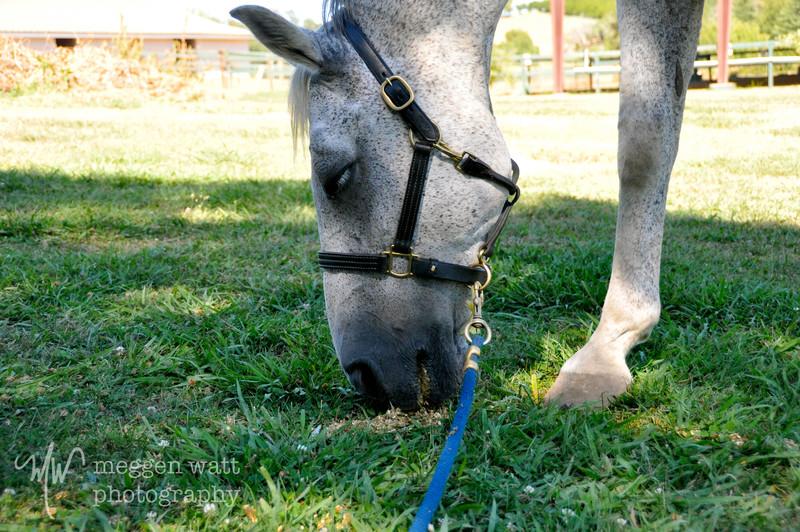 EB&Horses-019.jpg