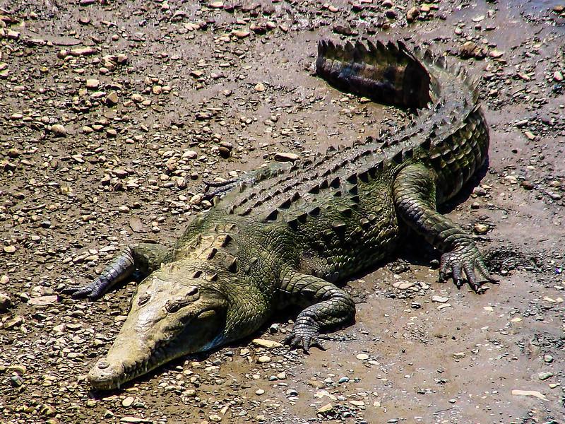 080310, Croc.jpg