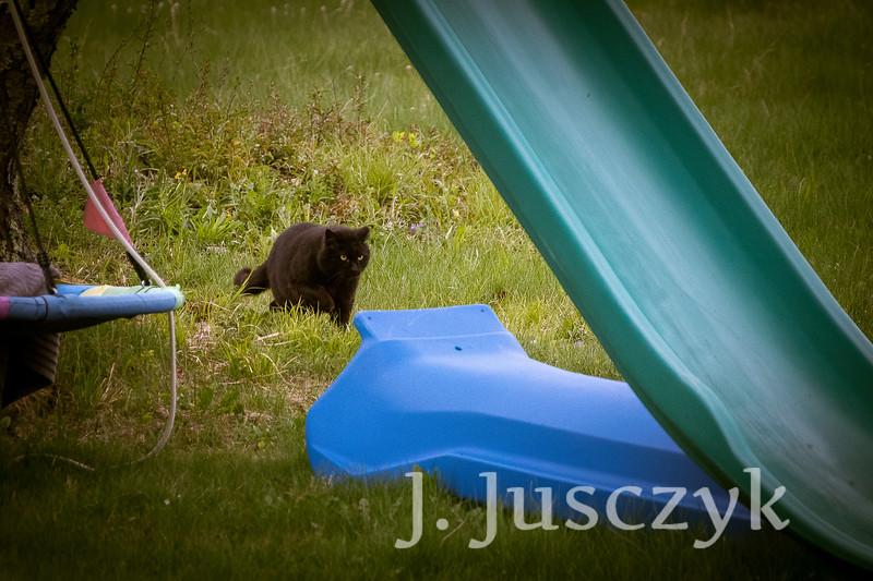 Jusczyk2021-6204.jpg