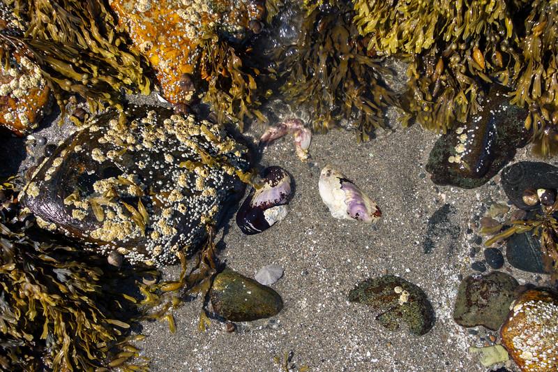 Rocks-beach-seaweed4.jpg
