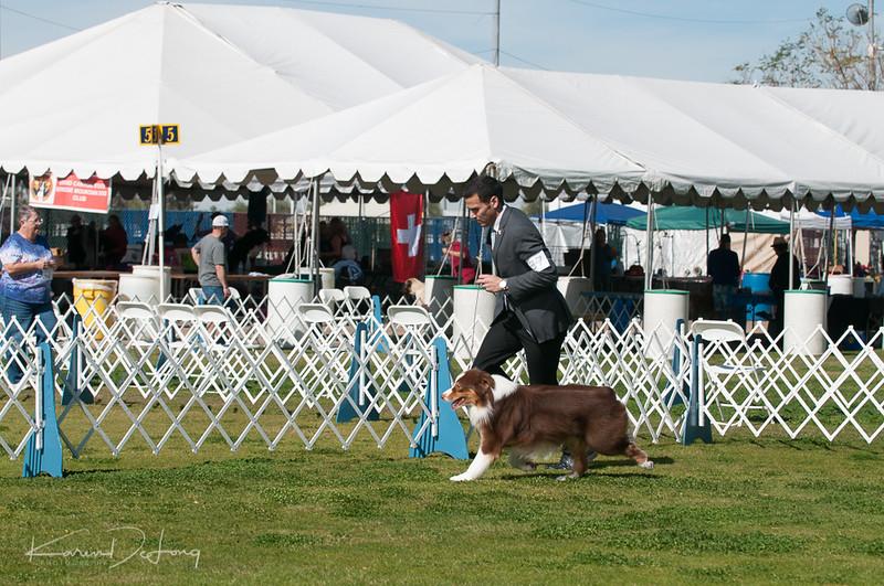 20170205_Australian Shepherds_Lost Dutchman Kennel Club-189.jpg