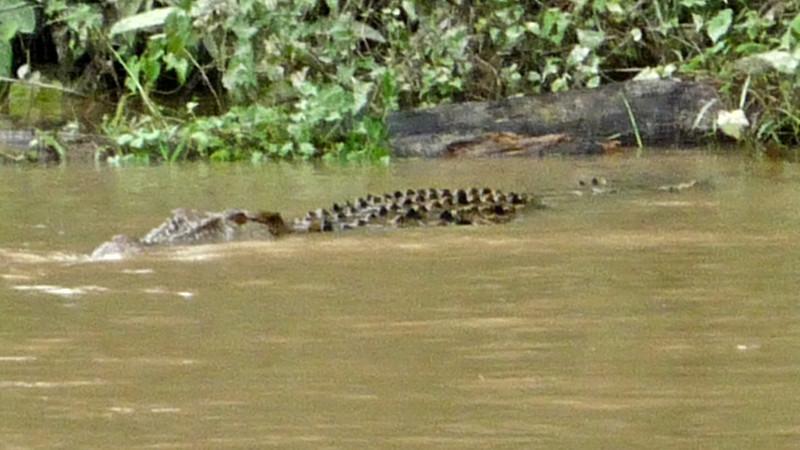 b croc 2.JPG