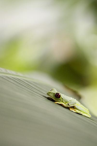 Treefrogs