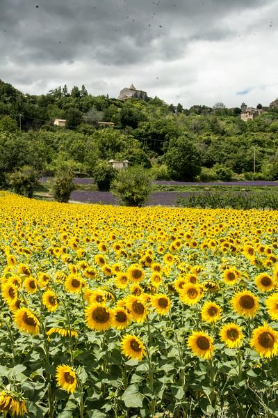 FranceSunflowersSiagnonDSC_2926.jpg