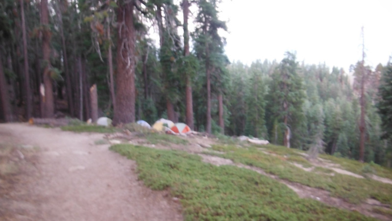 sequoia 059.JPG